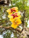 Braziliaanse bloemen stock foto's