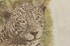 Braziliaanse munt: Echt Detail van 50 Reais bil van Jaguar royalty-vrije stock afbeelding