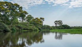 Braziliaanse Panantal en rivier Stock Foto's