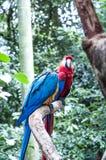 Braziliaanse vogels Royalty-vrije Stock Foto