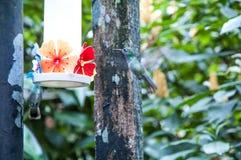 Braziliaanse vogels Royalty-vrije Stock Fotografie