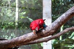 Braziliaanse vogels Royalty-vrije Stock Foto's