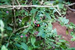 Braziliaanse vogels Stock Foto's