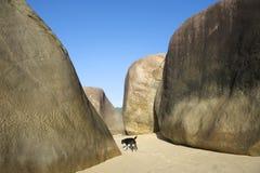 Brazilian Beach at Trindade Paraty Brazil with Dog Stock Photography