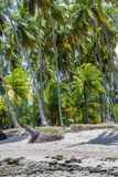 Brazilian Beaches-beach of Carneiros, Pernambuco. Praia dos Sheep is a beach located in the cities of Rio Formoso and Tamandar�, state of Pernambuco, Brazil royalty free stock photography