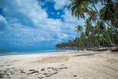 Brazilian Beaches-beach of Carneiros, Pernambuco. Praia dos Sheep is a beach located in the cities of Rio Formoso and Tamandar�, state of Pernambuco, Brazil Royalty Free Stock Images