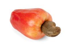 Brazilian Caju Cashew Fruit. Fresh ripe Brazilian Caju Cashew fruit with path royalty free stock image