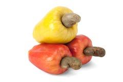 Brazilian Caju Cashew Fruit. Fresh ripe Brazilian Caju Cashew fruit with path royalty free stock images