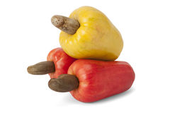 Brazilian Caju Cashew Fruit. Fresh ripe Brazilian Caju Cashew fruit with path stock photo