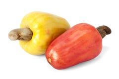 Brazilian Caju Cashew Fruit. Fresh ripe Brazilian Caju Cashew fruit with path stock images