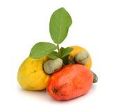 Brazilian Caju Cashew Fruit. Fresh ripe Brazilian Caju Cashew fruit with path Stock Image