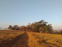 Brazilian cerrado. Native brazilian biome Stock Image