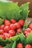 Brazilian Cherry. Close-up of Brazilian Cherry, also known as pitanga Stock Photos