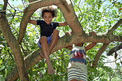 Brazilian children climbing in tropical tree Royalty Free Stock Photo