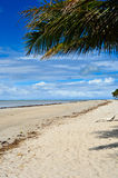 Brazilian Coastline Royalty Free Stock Image