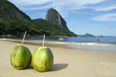 Brazilian Coco Gelado Coconuts Red Beach Rio de Janeiro Royalty Free Stock Photo