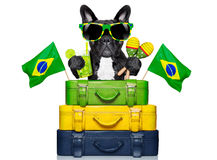 Brazilian dog Royalty Free Stock Image