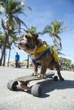 Brazilian Dog Riding Skateboard Rio de Janeiro Brazil Stock Photography