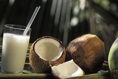 Brazilian drinks: batida de coco. Royalty Free Stock Image