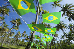 Brazilian Flag Bunting Coconut Palm Trees Grove Stock Photo