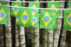 Brazilian Flag Bunting Hanging Bamboo Jungle Royalty Free Stock Photo