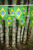Brazilian Flag Bunting Hanging Bamboo Jungle Royalty Free Stock Photos