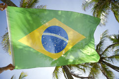 Brazilian Flag Wind Sunlight Palm Trees Royalty Free Stock Photos