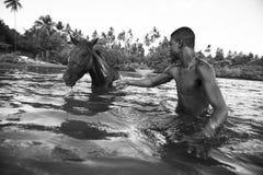 Brazilian Horse and Rider in the Sea Bahia Brazil Stock Image