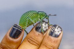 Brazilian insects outdoors royalty free stock photography