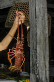 Brazilian Lobster hold by fisherman with natural wood column as Stock Photos