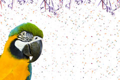 Brazilian Macaw on Carnival Stock Photo