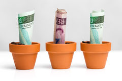 Brazilian money concept growth Stock Photo