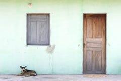 Brazilian Nordeste Village Architecture with Dog Royalty Free Stock Photos
