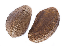 Brazilian nuts Stock Photo