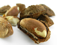 Brazilian nuts Royalty Free Stock Image