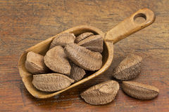 Brazilian nuts in rustic scoop Stock Photography