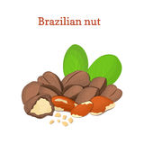 Brazilian nuts. Vector illustration of a handful  nut peeled  and in shell, leaves isolated  Royalty Free Stock Photos