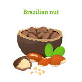 Brazilian nuts. Vector illustration of a handful  nut peeled  and in shell, leaves  on white background it can Royalty Free Stock Images