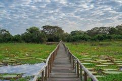 Brazilian Panantal skyline and wooden footbridge Stock Image