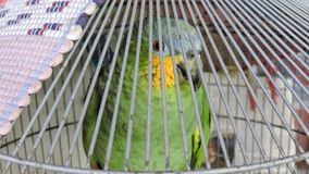 Brazilian parrot, green and yellow, with blurred background, bird`s head.  Stock Photography