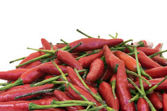 Brazilian pepper known in Portuguese as Royalty Free Stock Photo