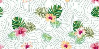 Brazilian rain forest. Stock Images