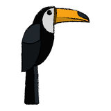 Brazilian toucan bird nature sketch. Vector illustration eps 10 Stock Photography