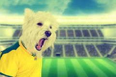 Vintage Brazilian dog fan screaming at stadium. Brazilian west highland white terrier fan screaming at stadium - retro style Royalty Free Stock Photography
