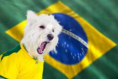 Screaming dog world cup Royalty Free Stock Photos
