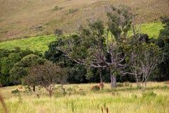 Brazilianl landscape Stock Photo