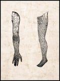 Brazo y pierna Fotos de archivo