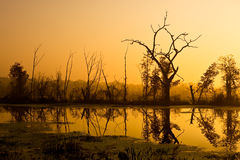 Brazos Bend Dawn Stock Photography