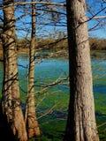 Brazos krökningdelstatspark Arkivbild