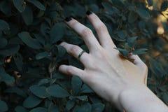 brazos Mano Fotografía de archivo